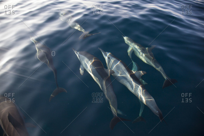 Spinner dolphins off the coast of Kalpitiya, Sri Lanka
