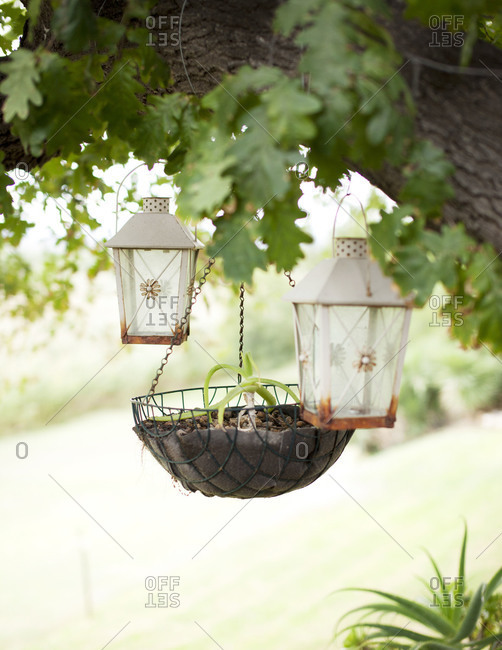 Lanterns and a planter hanging from a tree