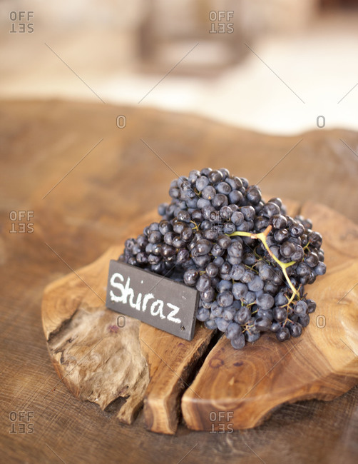 Close up of a bunch of Shiraz grape