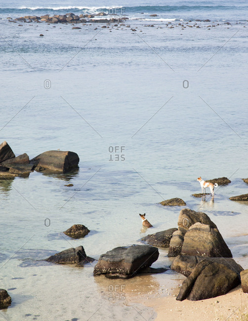 Two dogs looking out to the sea, Galle, Sri Lanka