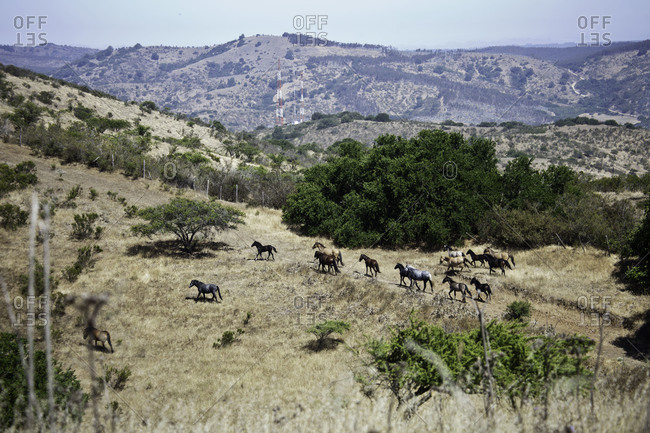 Herd of wild horses at a field