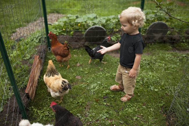 Young boy staring at hen in chicken coop