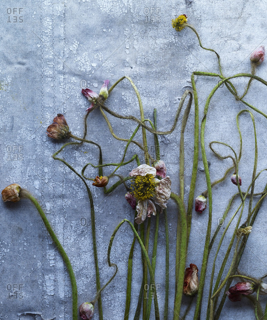 Still life of dried flowers over gray surface