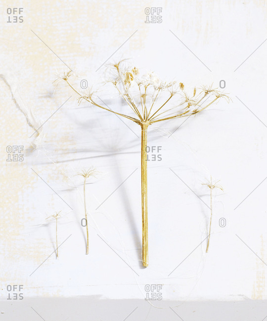 Still life of dry plants
