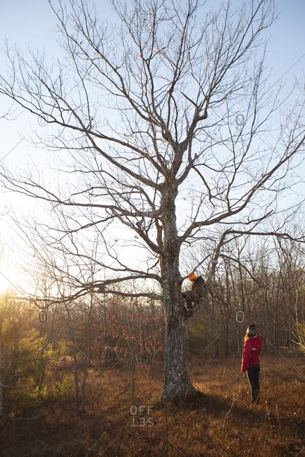 A woman watches a man climb a sparse tree.