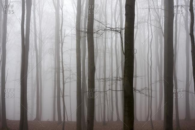 Fog in the nature park Taunus