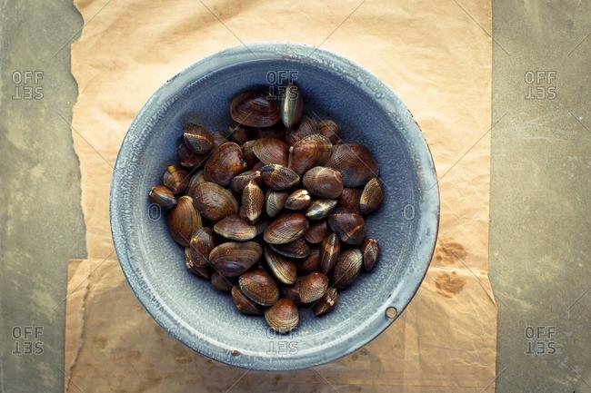 Top view of fresh Manila clam
