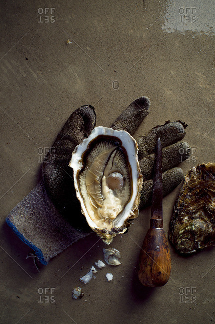 Close up of  opened fresh oyster