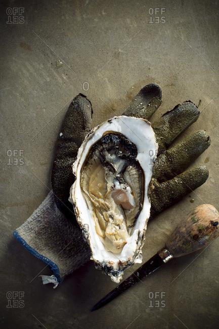 Fresh shucked oyster