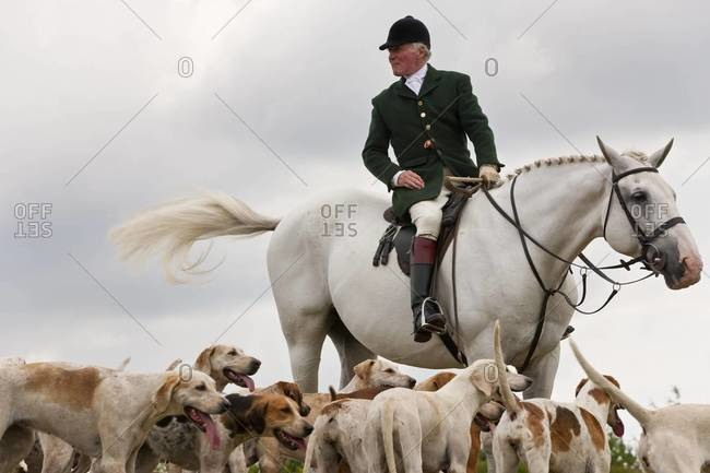 Gloucestershire, UK - August 8, 2010: Horseman and hounds at a fox hunting in Gloucestershire, UK