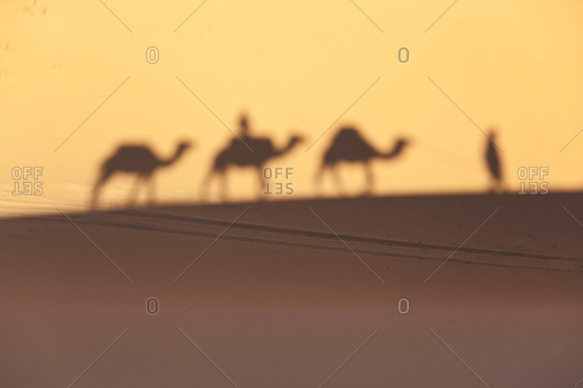 Camel train shadows, Erg Chebbi, Sahara Desert, Morocco