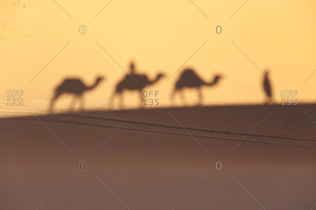 Camel train shadows, Erg Chebbi, Sahara Desert, Morocco