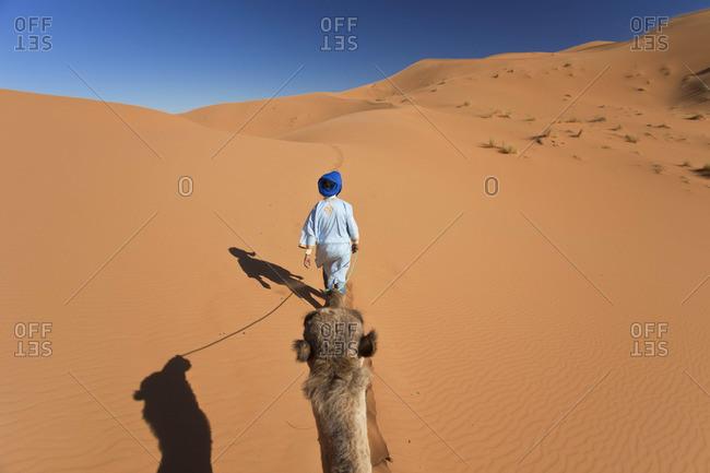 Tuareg man leading camel, Erg Chebbi, Sahara Desert, Morocco