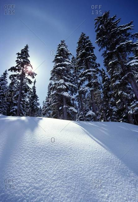 Landscape of snowy forest, near Vancouver, Canada