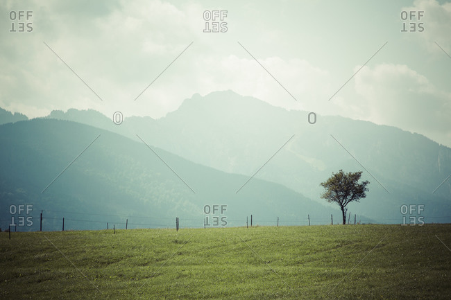 Meadow and single tree in front of mountains and cloudy sky