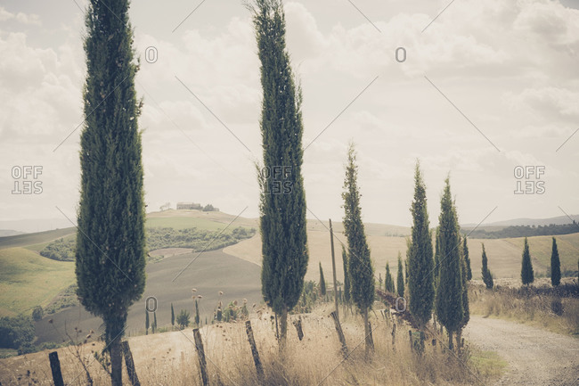 Rolling landscape with cypresses
