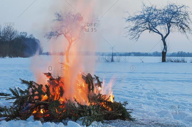 Burning an evergreen tree