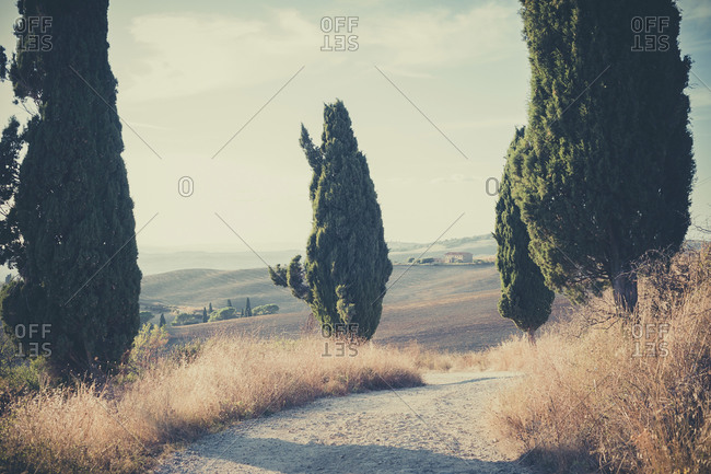 Dirt track with cypresses