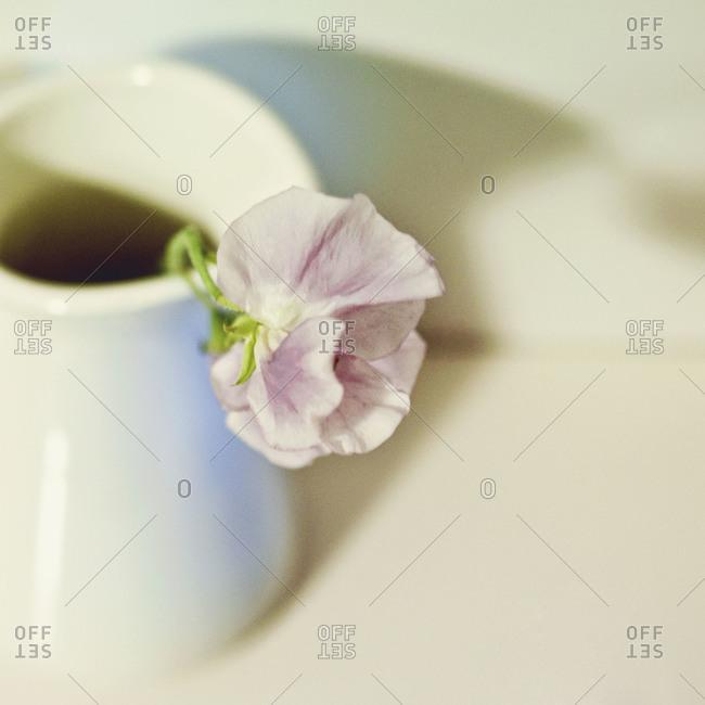 Wilted flower in vase