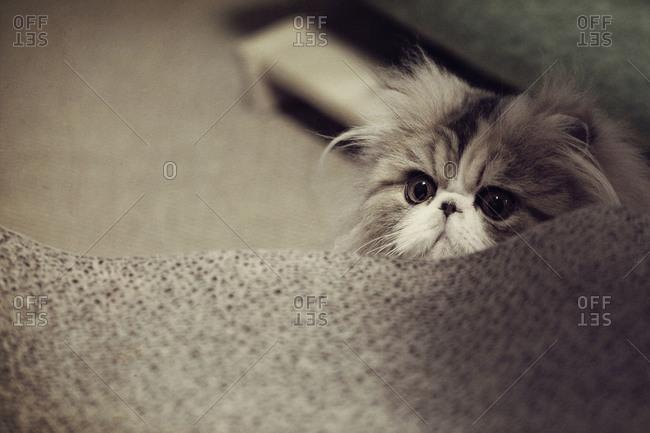 Kitten peaking over