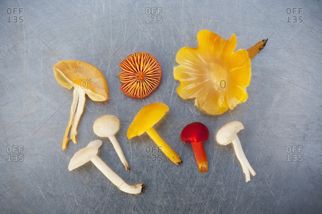 Overhead view of  multicolored mushrooms