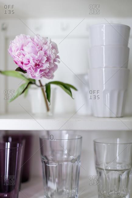 A flower in a kitchen cupboard