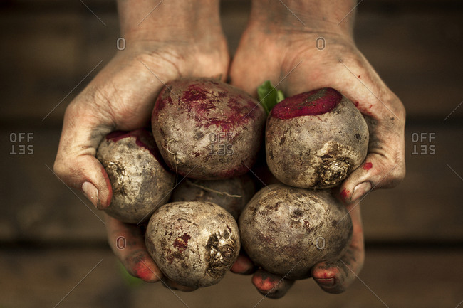 Person holding a handful of beetroots