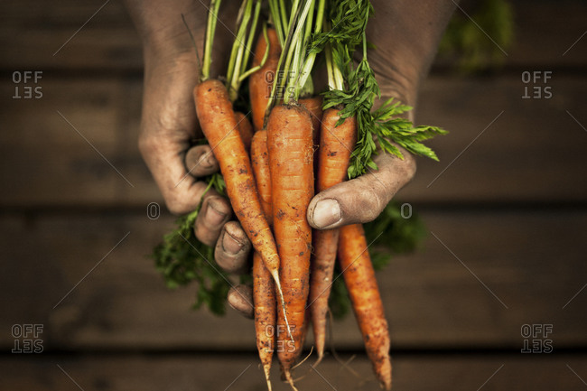 Person holding a handful of carrots