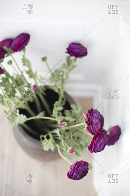 Purple flowers in vase, high angle view