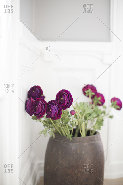 Purple flowers in pot