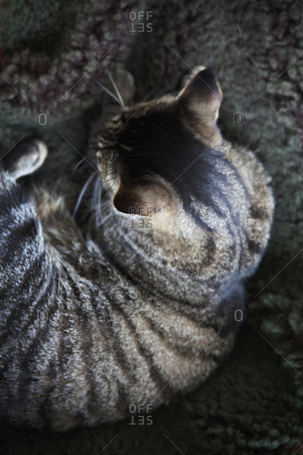 High angle view of cat lying down
