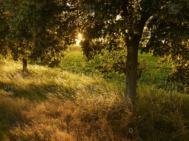 Landscape, Yngsjo, Skane