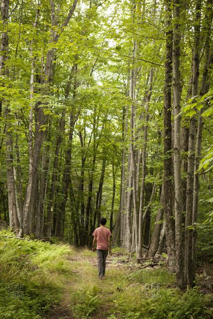 A man walks through the woods