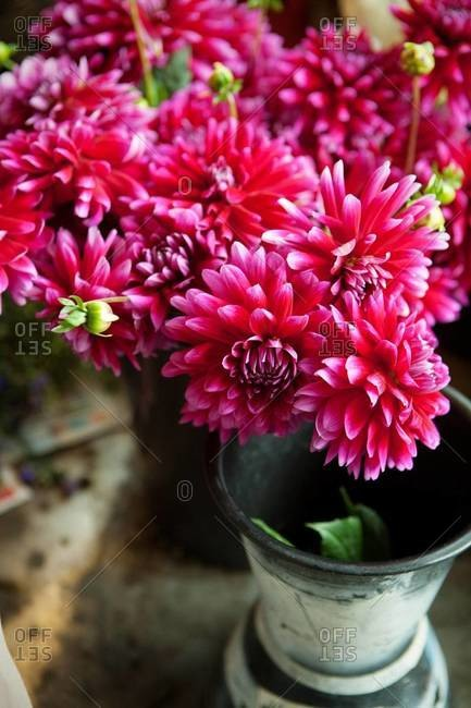 Pink dahlias at a market