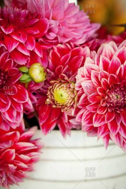 Close up of dahlias at a market