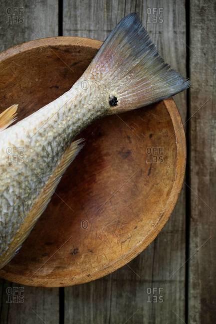 Still life of spottail bass