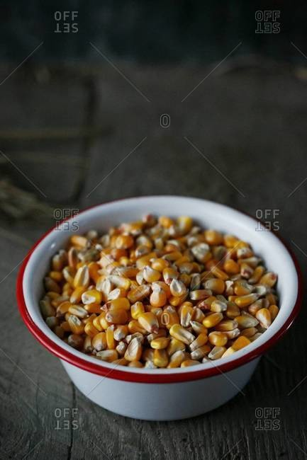 Close up corn kernels