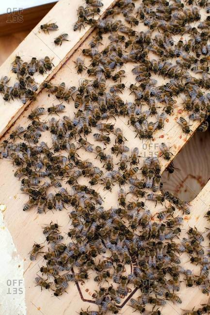 Honey bees gathering on beehive