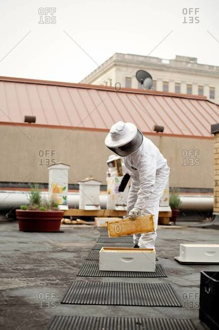 Apiarist picking one frame from deep hive