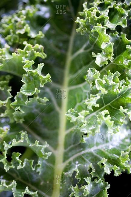 Close up of salad greens