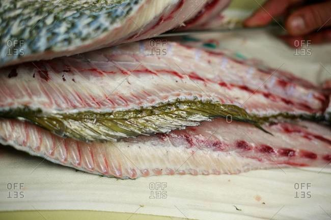 Close up of red snapper fillets