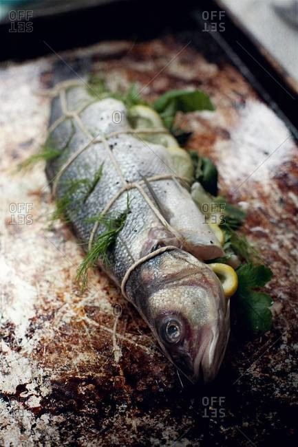 Whole bronzini stuffed with lemon and herbs prepared for baking