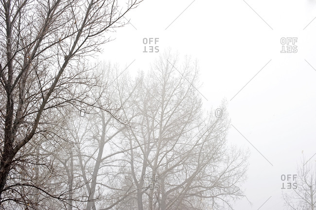Branches on a foggy winter day
