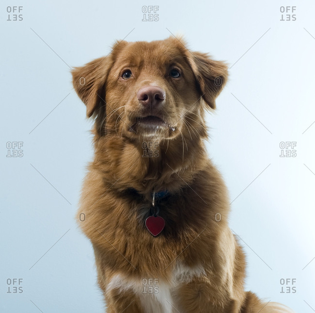 A cute dog with a goofy look on his face