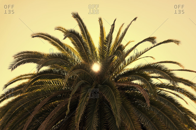 Close-up of palm tree, Yerba Buena Island, California, USA