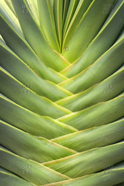 Close up detail of Succulent plant