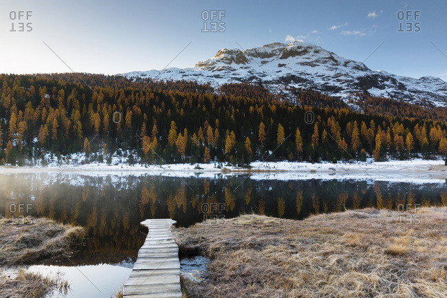 Larch trees in Autumn foliage and snow covered mountain reflected in Lake Staz at Dawn, Canton of Graubunden, Switzerland