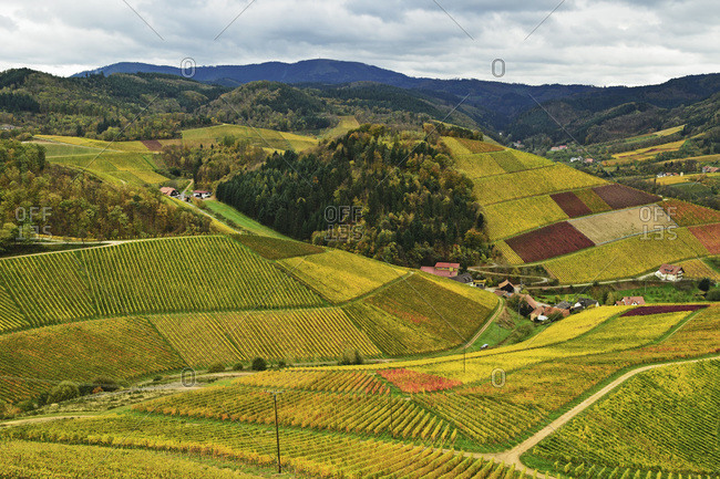 Vineyard Landscape with Black Forest in the distance, Ortenau, Baden Wine Route, Baden-Wurttemberg, Germany