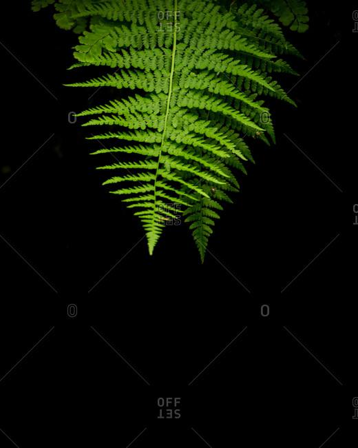 Close up of fern in nature