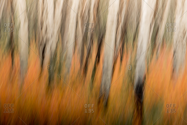 Abstract autumn colors